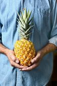 Closeup of a man holding a homegrown pineapple in front of his torso. The person is wearing a blue work shirt and is unrecognizable. Vertical format.
