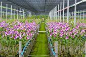 Garden Flower Orchid Farm