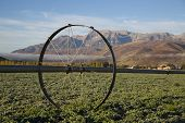 foto of alfalfa  - Alfalfa field in autumn high mountain valley - JPG