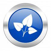 leaf blue circle chrome web icon isolated