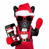 stock photo of christmas dog  - Santa claus christmas dog wearing a hat taking a selfie isolated on white background - JPG