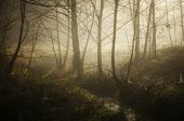 Foggy morning in forest with river