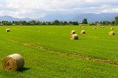 Country Landscape In Lazio (italy)
