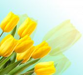 Beautiful tulips on light background