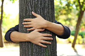 stock photo of gases  - Person hugs trunk large tree - JPG