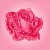 Rose Pink Simple