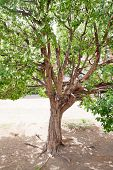 One Tree With Dense Foliage And Roots