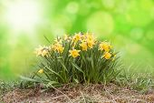 Easter Flowers in front of shiny bokeh background