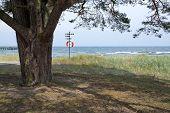 Tree and life saving buoy