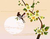 sakura .Evening in the garden blooming cherry