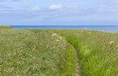Coastal Footpath At Flamborough Head, Yorkshire, Uk
