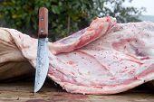 Slaughterer Knife