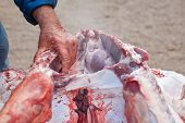 pic of slaughter  - Traditional home slaughtering in a rural area - JPG