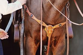 stock photo of western saddle  - horse standing with western saddle and bridle on detail - JPG