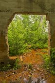 pic of house woods  - Inside the remains of a quarry power house - JPG