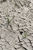 stock photo of loam  - Ground dried by the sun covered with cracks - JPG