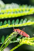 stock photo of shield-bug  - a cute red bug on green leaf - JPG