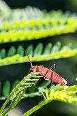 pic of creepy crawlies  - a cute red bug on green leaf - JPG