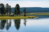 stock photo of garden eden  - Reflection of a bison near a lake in Yellowstone National Park - JPG