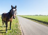 foto of brown horse  - Dark brown horse with a white blaze and a bridle looks curiously beside the electric fence - JPG