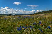 pic of cloud forest  - Beautiful mountain landscape with wildflowers in the meadow on a background of mountains forest and blue sky with clouds - JPG