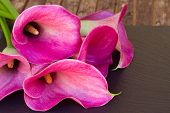 stock photo of calla  - Pink calla lilly flowers close up on black  background - JPG
