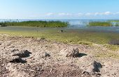 pic of algae  - Alga on the bank of the Gulf of Finland - JPG
