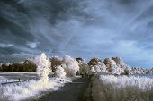 stock photo of unique landscape  - Stunning unique infra red landscape with false color impact - JPG