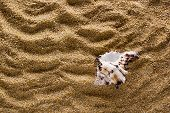 picture of shells  - Sea shell on a coarse - JPG