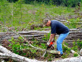 picture of man chainsaw  - Man sawing tree limbs into firewood with a chainsaw - JPG