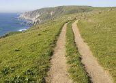 Coastal Path, Tomales Point