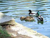 Ducks Archbishops Residence