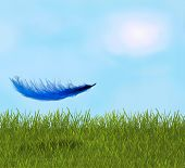 Feather In The Field