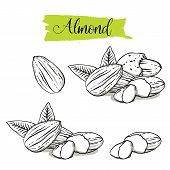 Hand Drawn Sketch Style Almond Set. Single, Group Seeds, Almond In Nutshells Group. Organic Nut, Vec poster