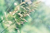 Dry Grass In Windy Meadow, Sunny Green And Blue Faded Tones, Beautiful Abstract Nature Background, C poster