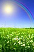 Campo de chamomiles, sol e arco-íris.