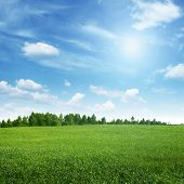 stock photo of grassland  - Beautiful summer landscape - JPG