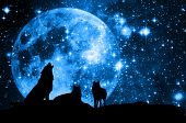 stock photo of blue moon  - wolves pack in silhouette against a blue starred sky with full moon - JPG