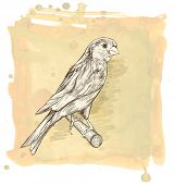 Sketch of a canary bird sitting on a branch & watercolor vintage background. Bitmap copy my vector id 87724654