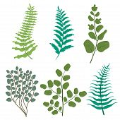 Green Leaves Floral Greenery Frest Fern Frond Eucalyptus Nature Branch Vector. Leaf Foliage Herb Pla poster
