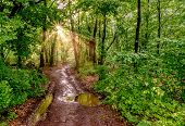 Sunrays In The Green Forest After Rain poster