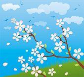 Постер, плакат: Весна фон с Сакура в цвету