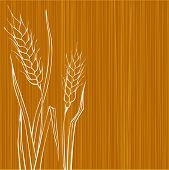 Rye design