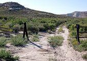 Wyoming Pioneer Trail
