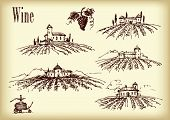 Vector hand drawn vineyard