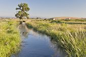 irrigation ditch in Colorado farmland near Fort Collins  with Rocky Mountains at a horizon, summer s