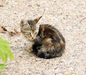 Little Sad Kitten Sitting In The Street
