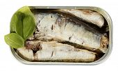 Sardines in can