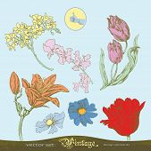Set of vector flowers for decoration and design
