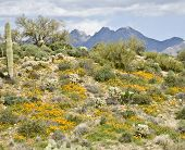 stock photo of superstition mountains  - Spring in Arizona - JPG
